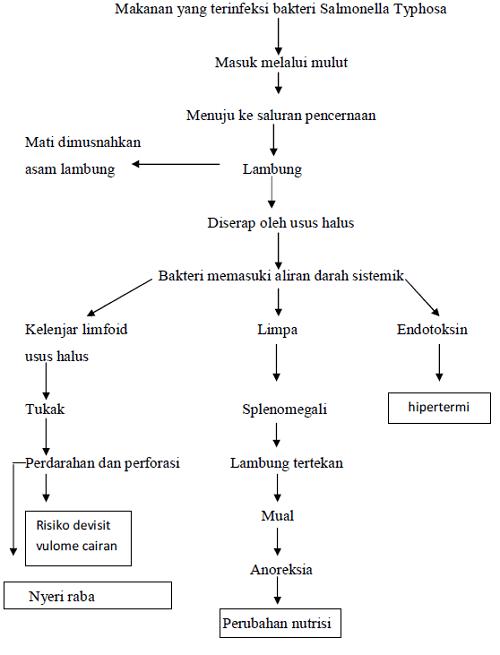 Patofisiologi tipes