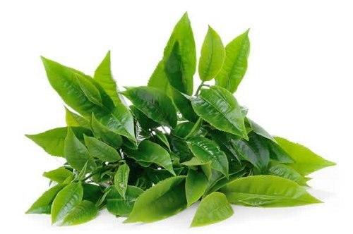 mencerahkan wajah dengan teh hijau