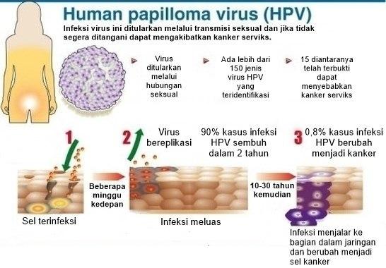 transmisi virus HPV