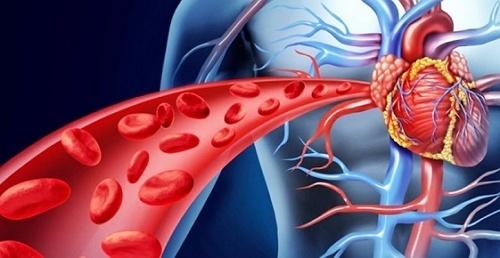 menjaga kesehatan peredaran darah