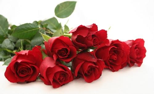 memerahkan bibir dengan mawar
