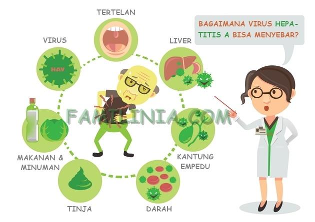 penularan hepatitis a - Familinia